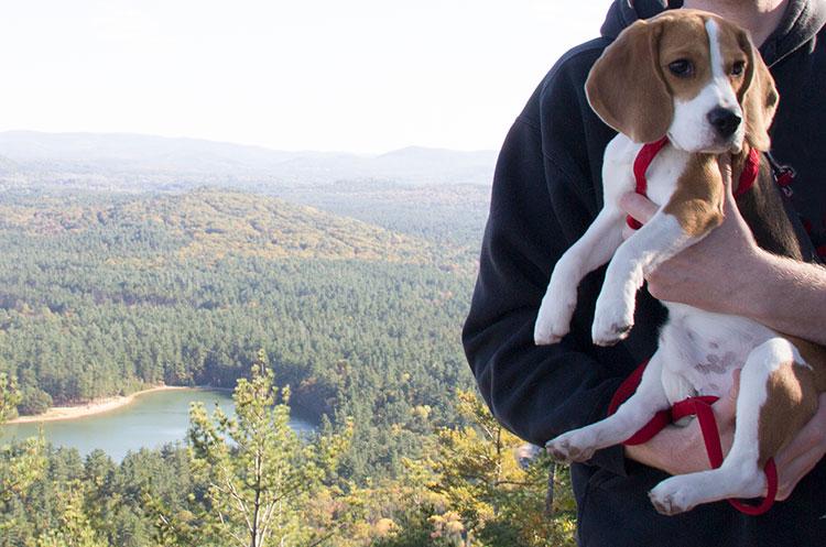 beagle-on-a-hike