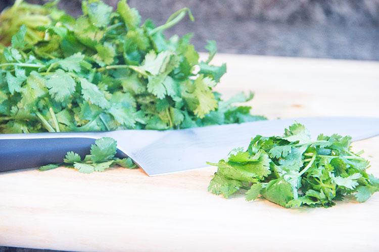 preparing-cilantro