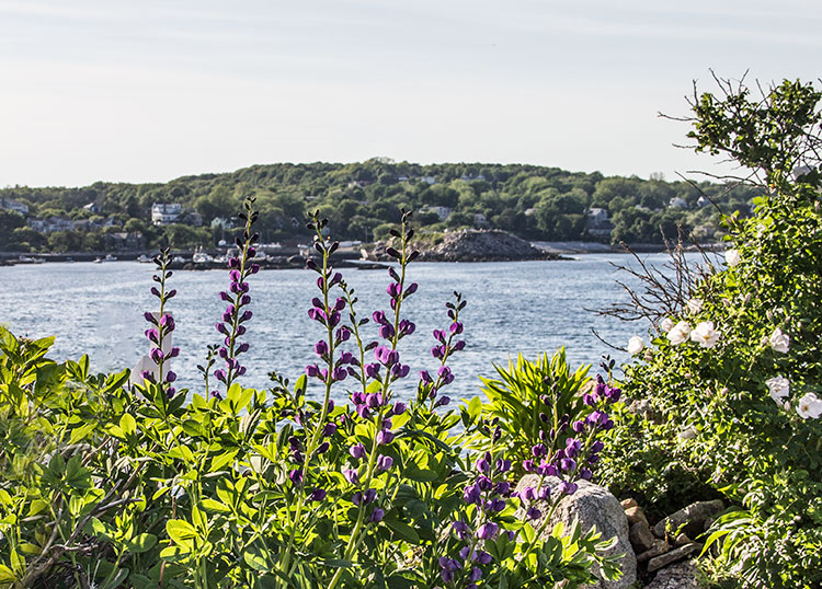 Rockport-flowers-and-coast