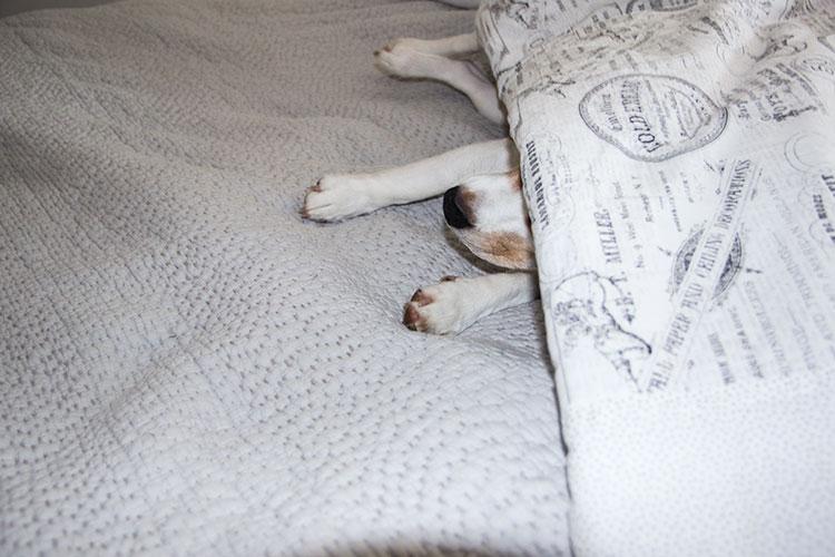 cal-napping