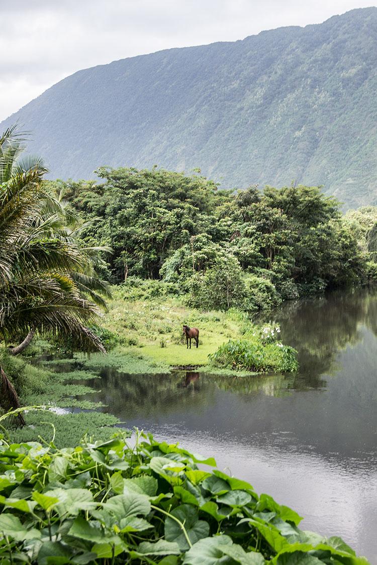 Waipio-Valley-Wild-Horse