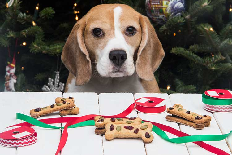 Calvins-Christmas-Cookies-Dog-Treats