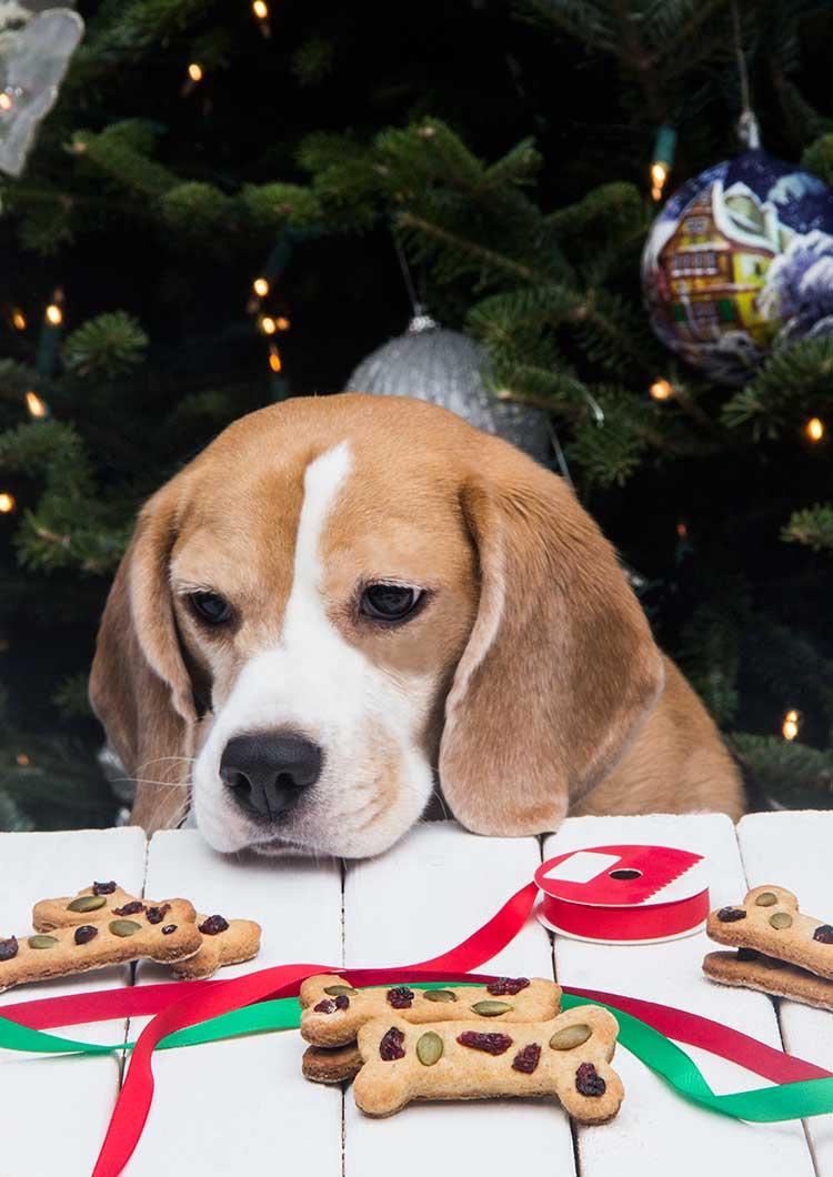 Calvins-Christmas-Cookies