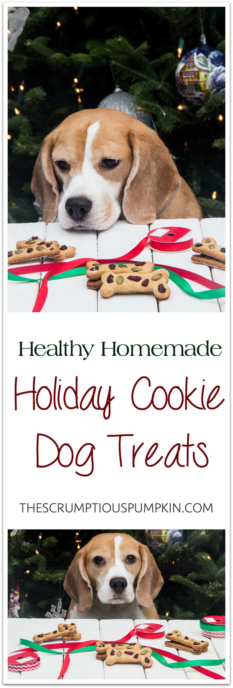 Healthy-Homemade-Holiday-Cookie-Dog-Treats