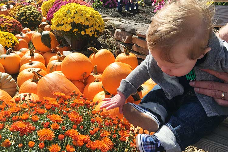 baby-beside-pumpkins-and-fall-flowers