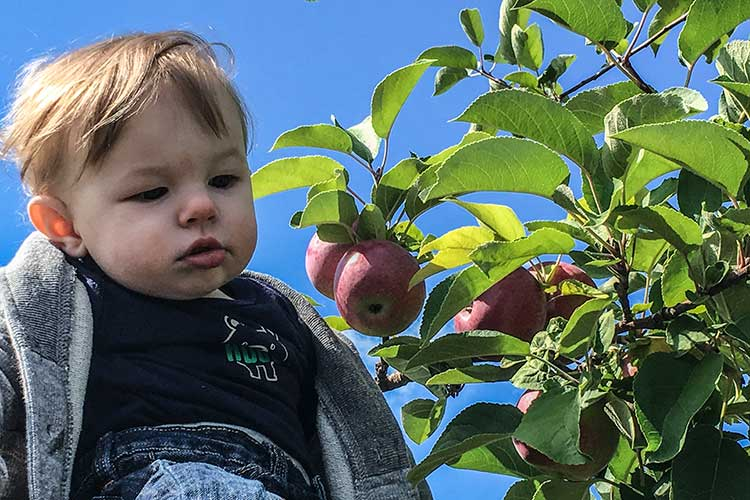 baby-near-apple-tree