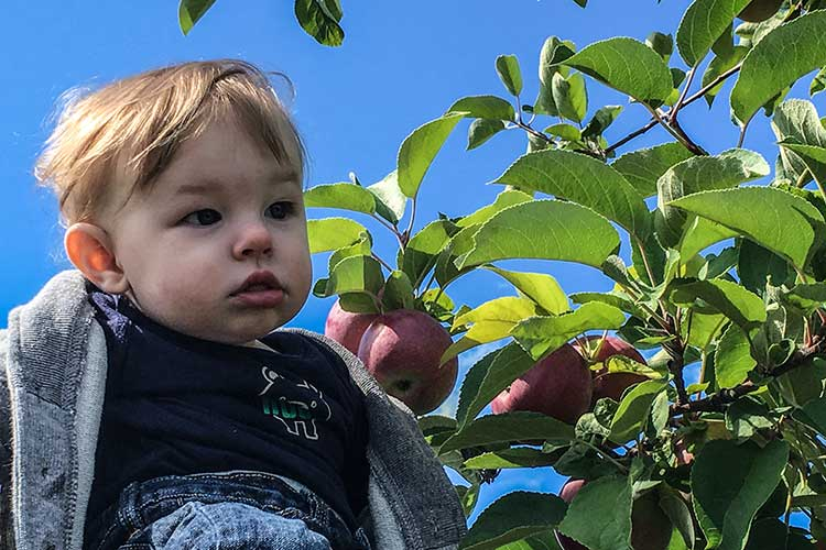 baby-picking-apples-at-orchard