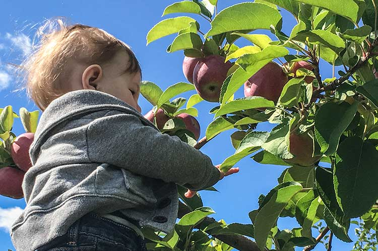 baby-picking-apples