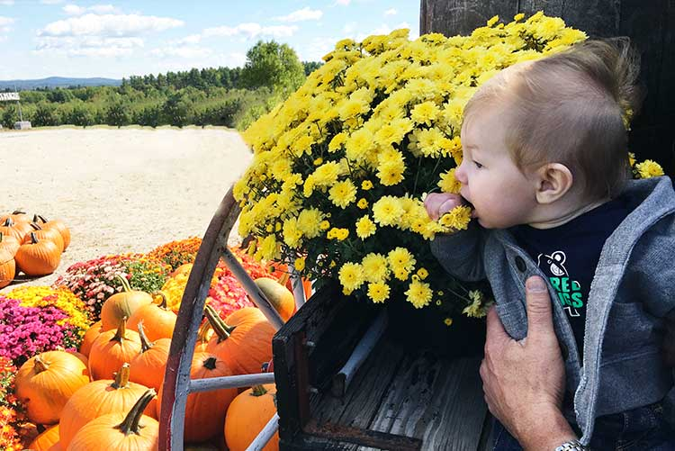 baby-with-fall-flowers-and-pumpkins