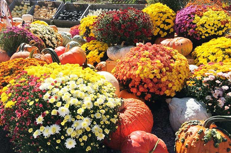 fall-harvest-autumn-pumpkins-flowers