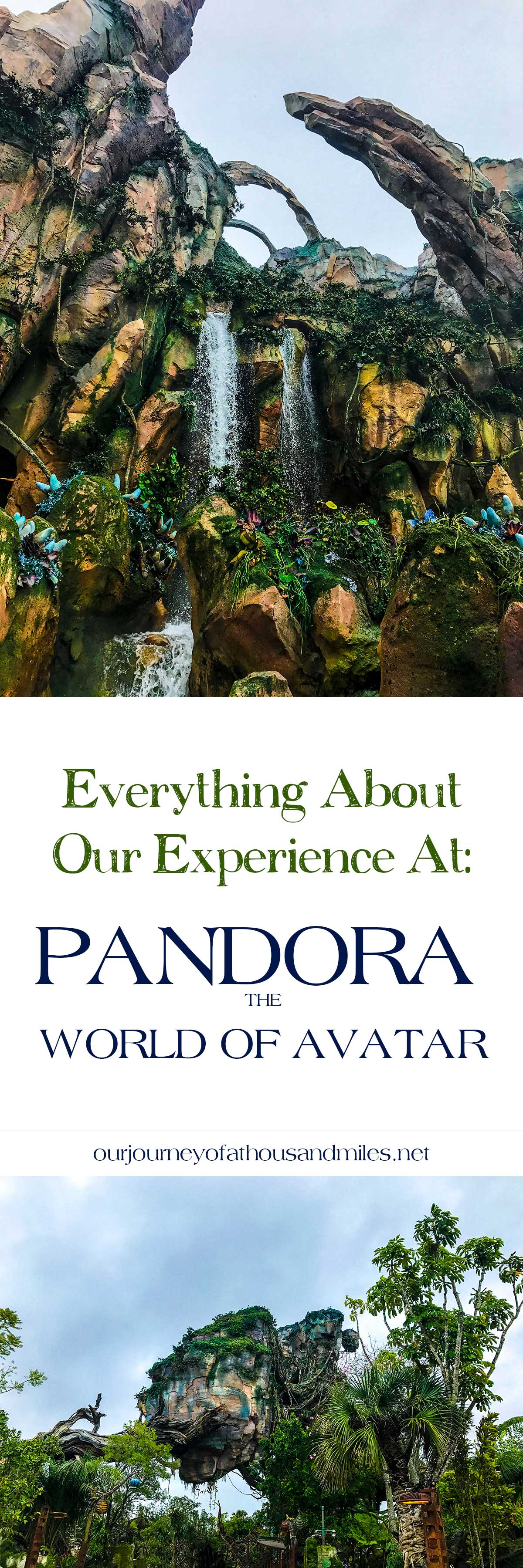 Everything-About-Our-Experience-At-Pandora-The-World-Of-Avatar
