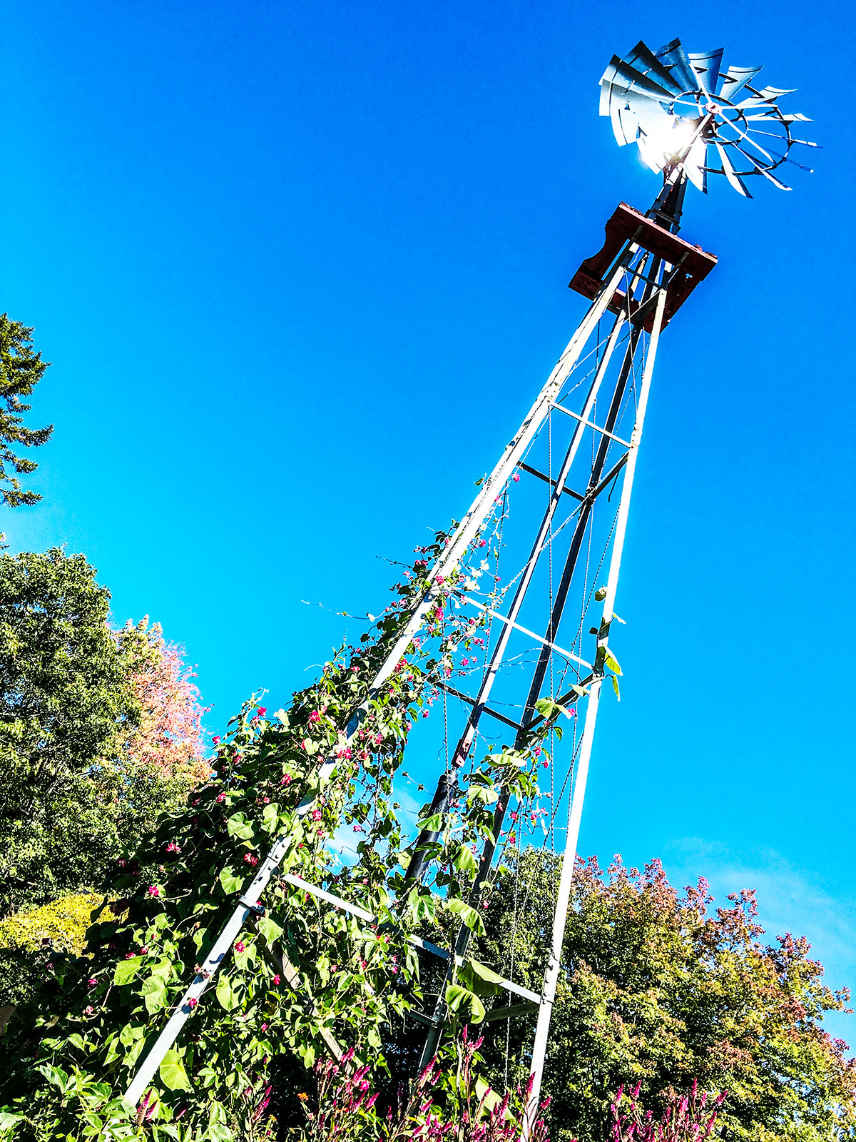 wind-mill-coastal-maine-botanical-gardens