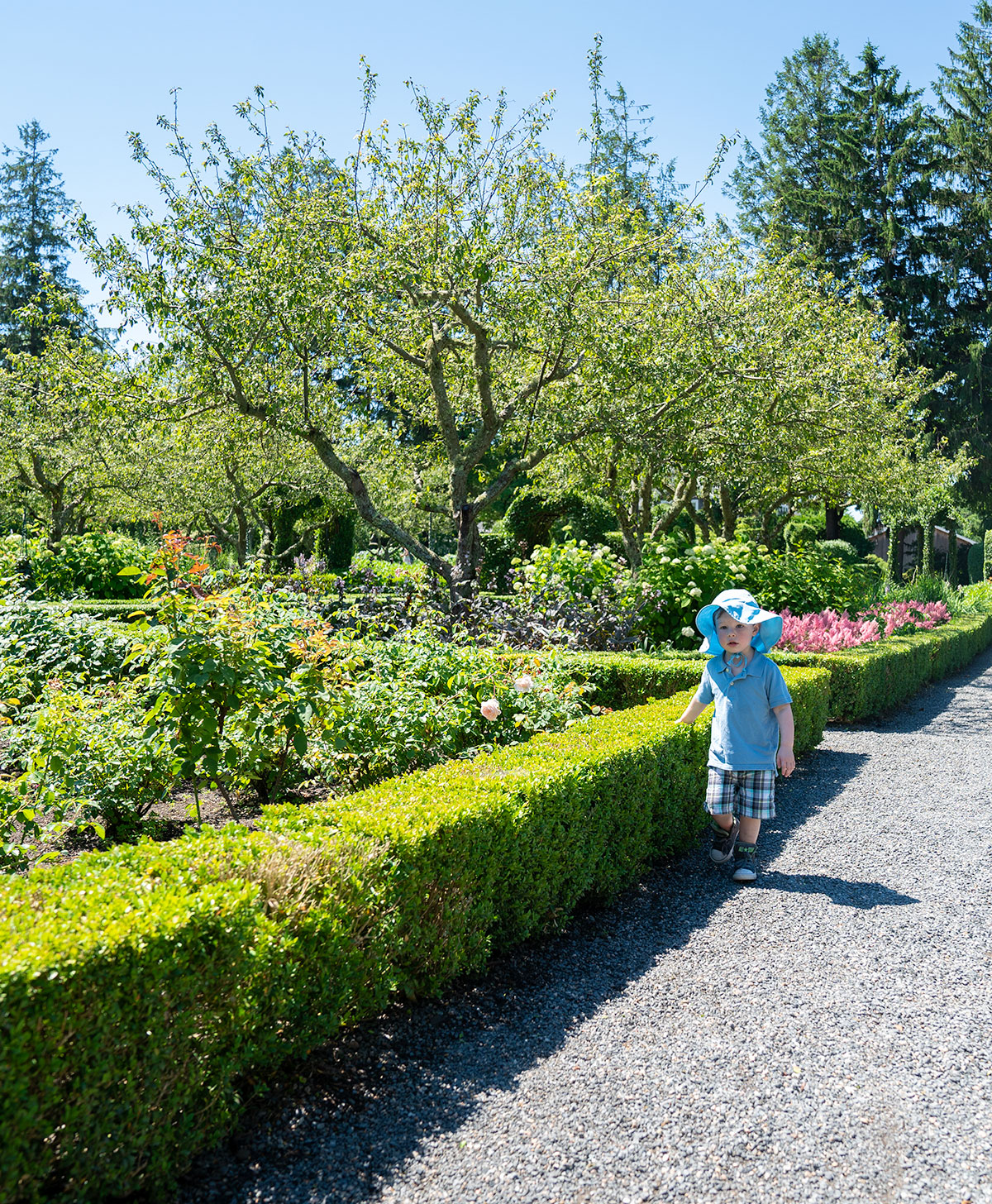 Wandering-Green-Animals-Topiary-Garden