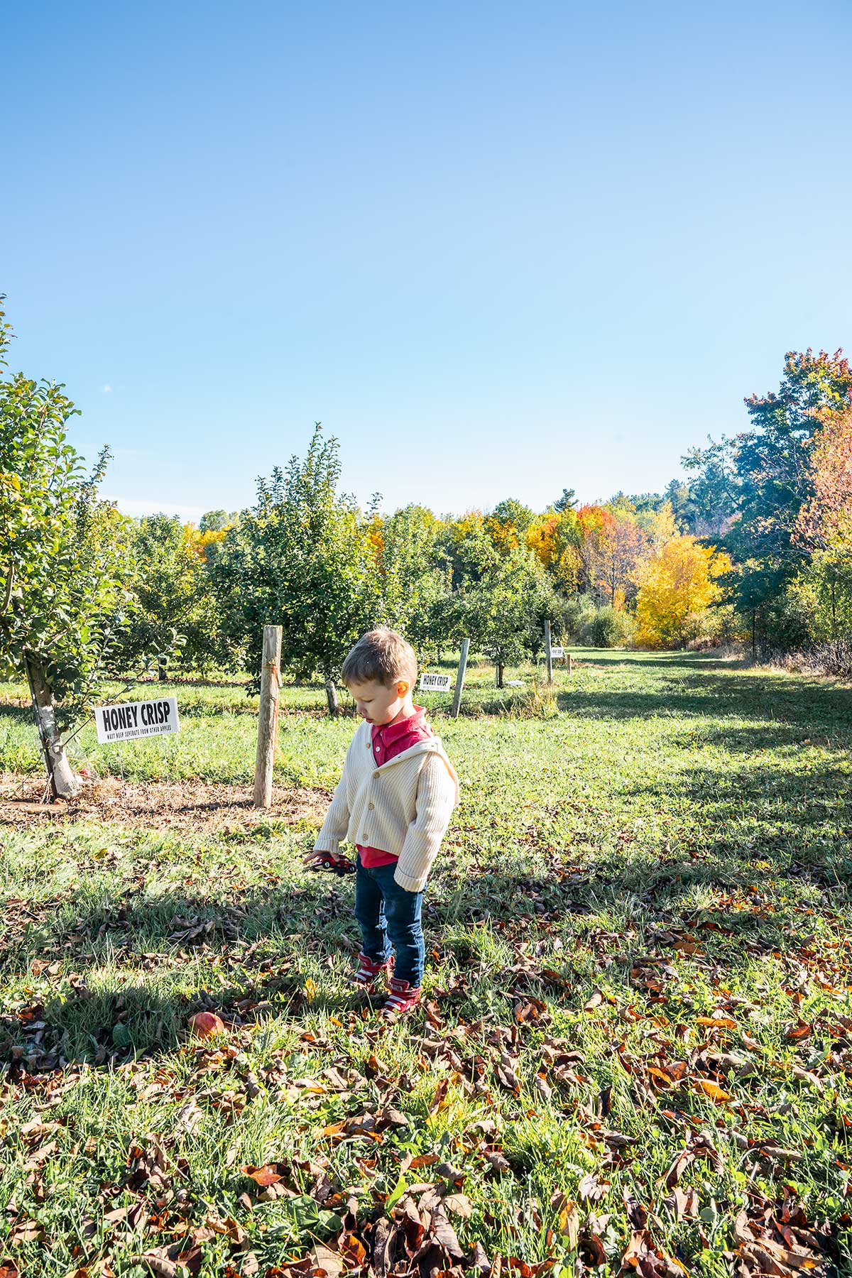 At-the-Apple-Orchard
