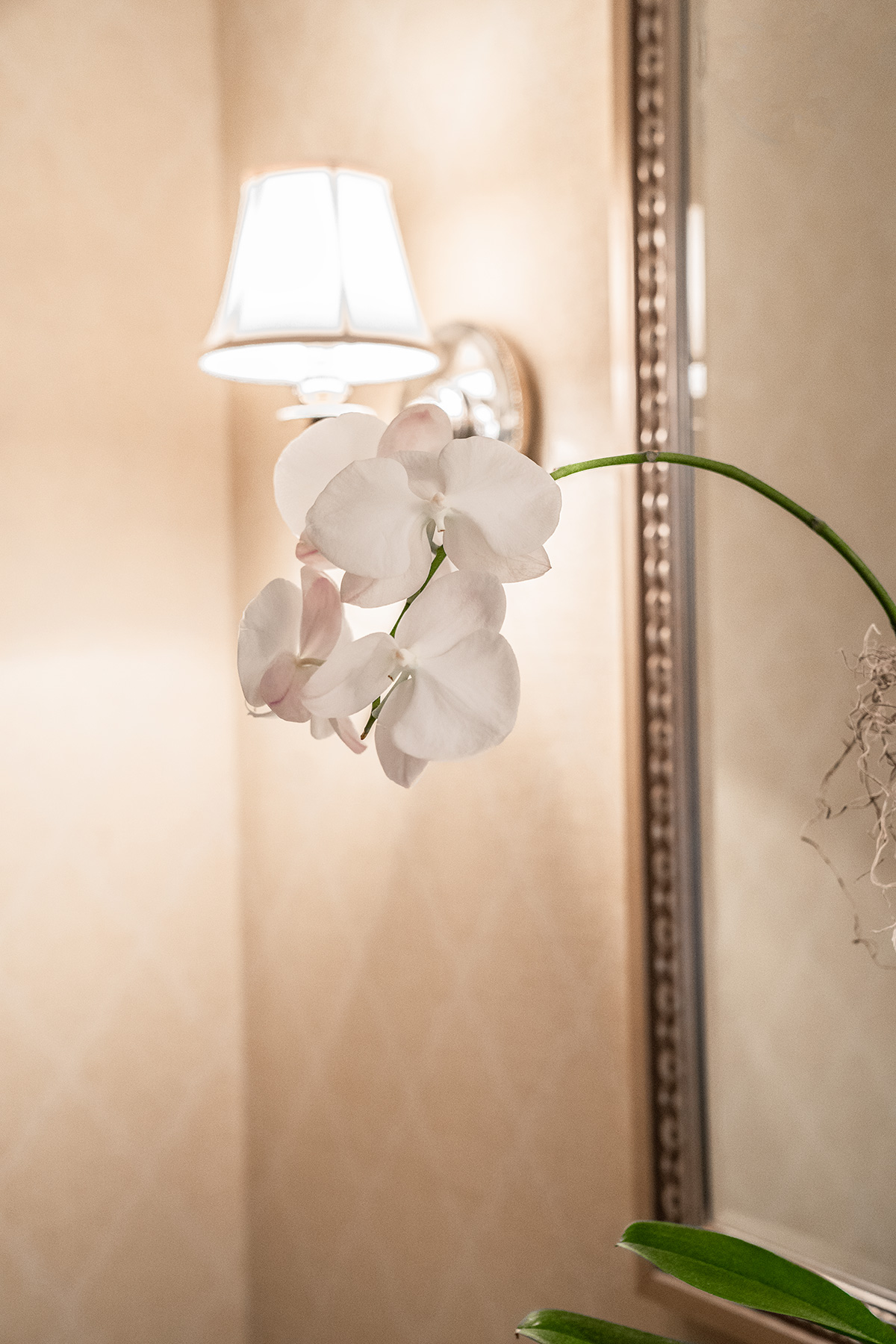 Orchids-at-The-Jefferson-Hotel-Richmond