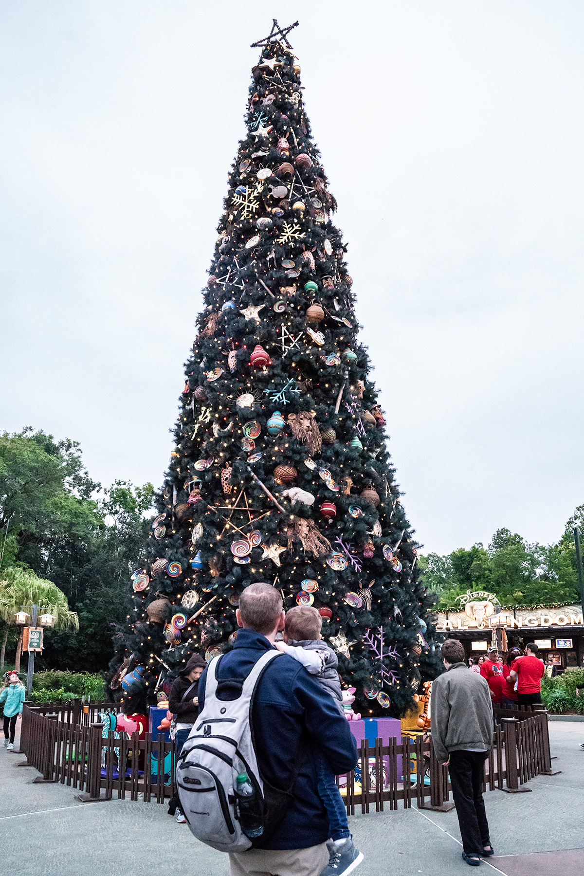 Christmas-Tree-at-Disneys-Animal-Kingdom