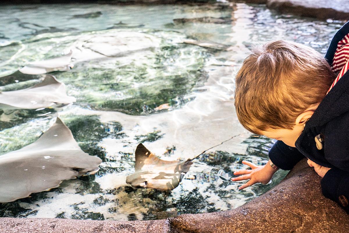 Touch-Tank-Aquarium-du-Quebec