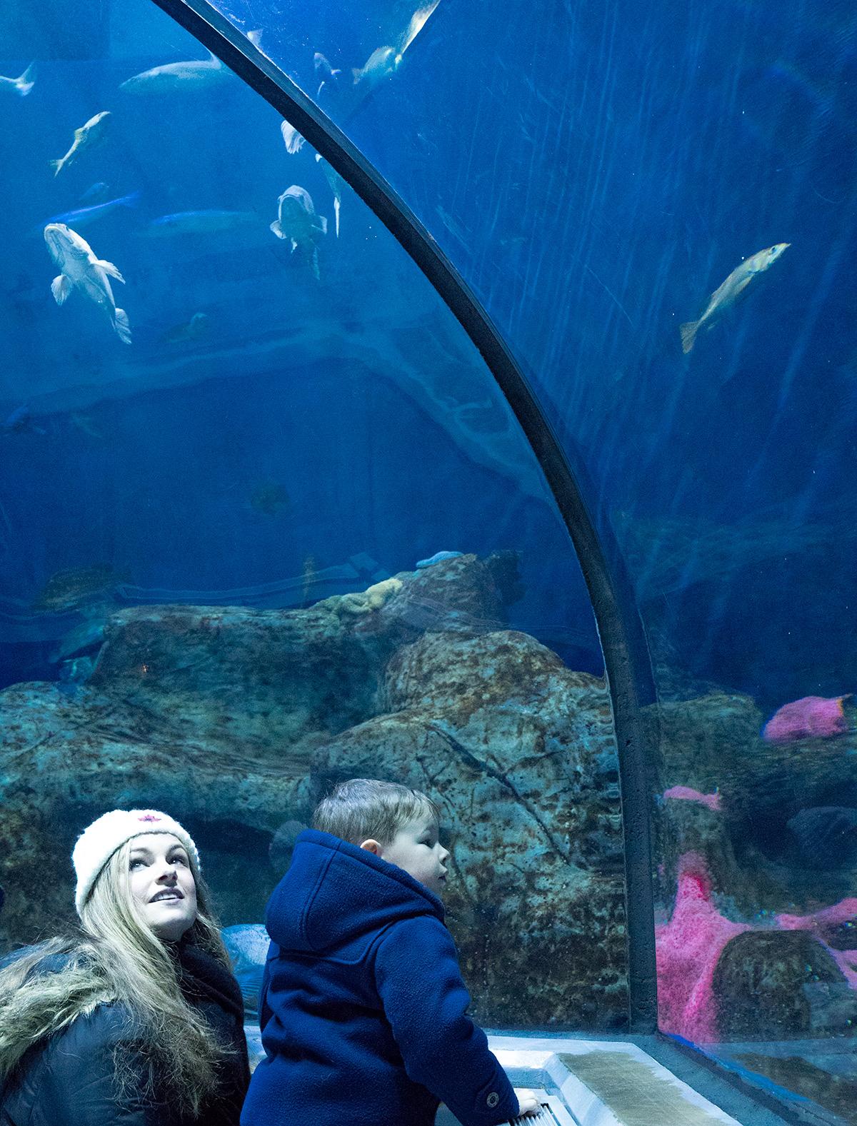 Tunnel-Aquarium-du-Quebec