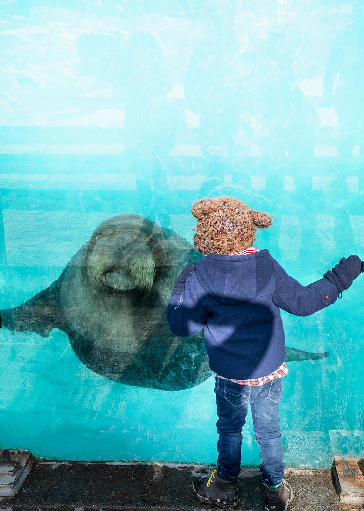 Walrus-Aquarium-du-Quebec