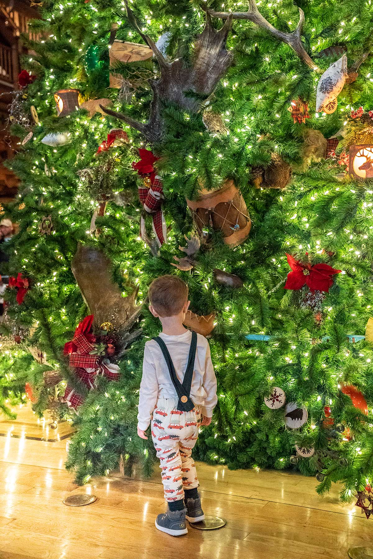 Christmas-Tree-Wilderness-Lodge