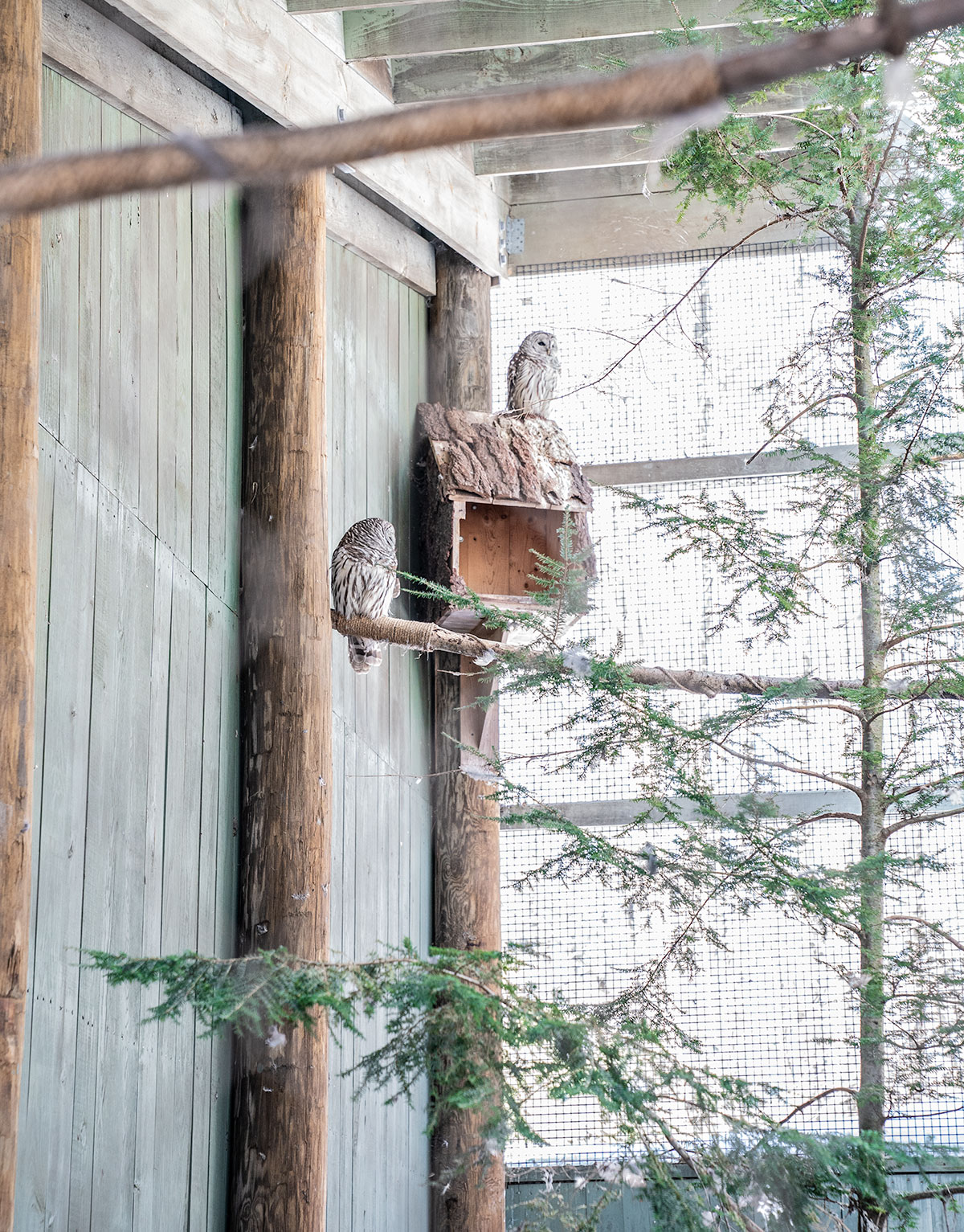 Vermont-Institute-of-Natural-Science-Owls