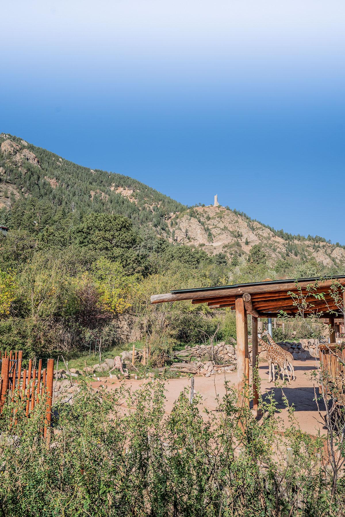 Cheyenne-Mountain-Zoo-Colorado-Springs-Giraffes
