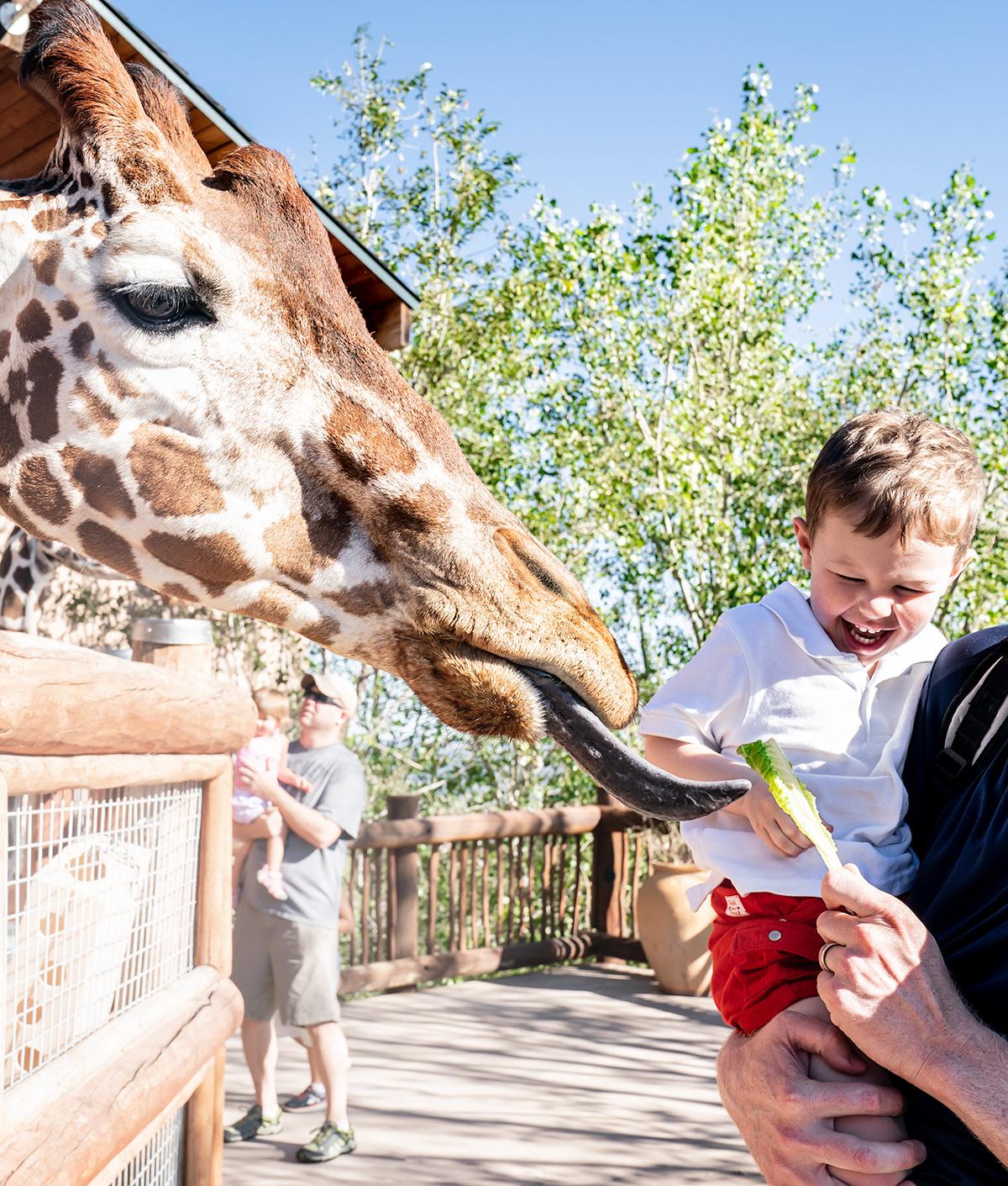 Feeding-Giraffes-Cheyenne-Mountain-Zoo-Colorado-Springs