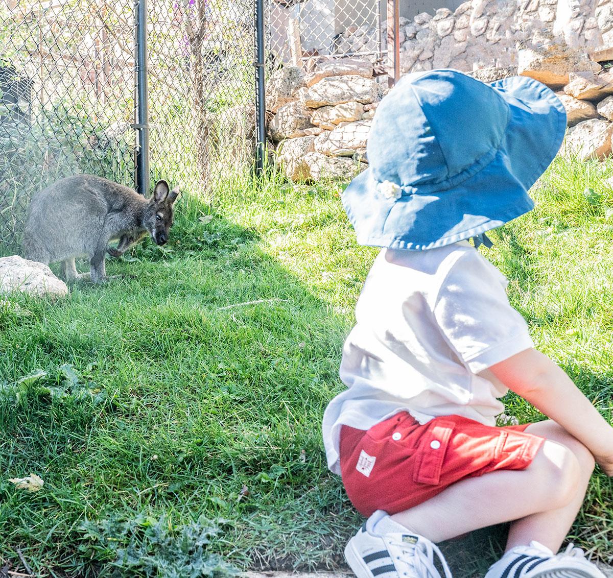 Kangaroo-Cheyenne-Mountain-Zoo-Colorado-Springs