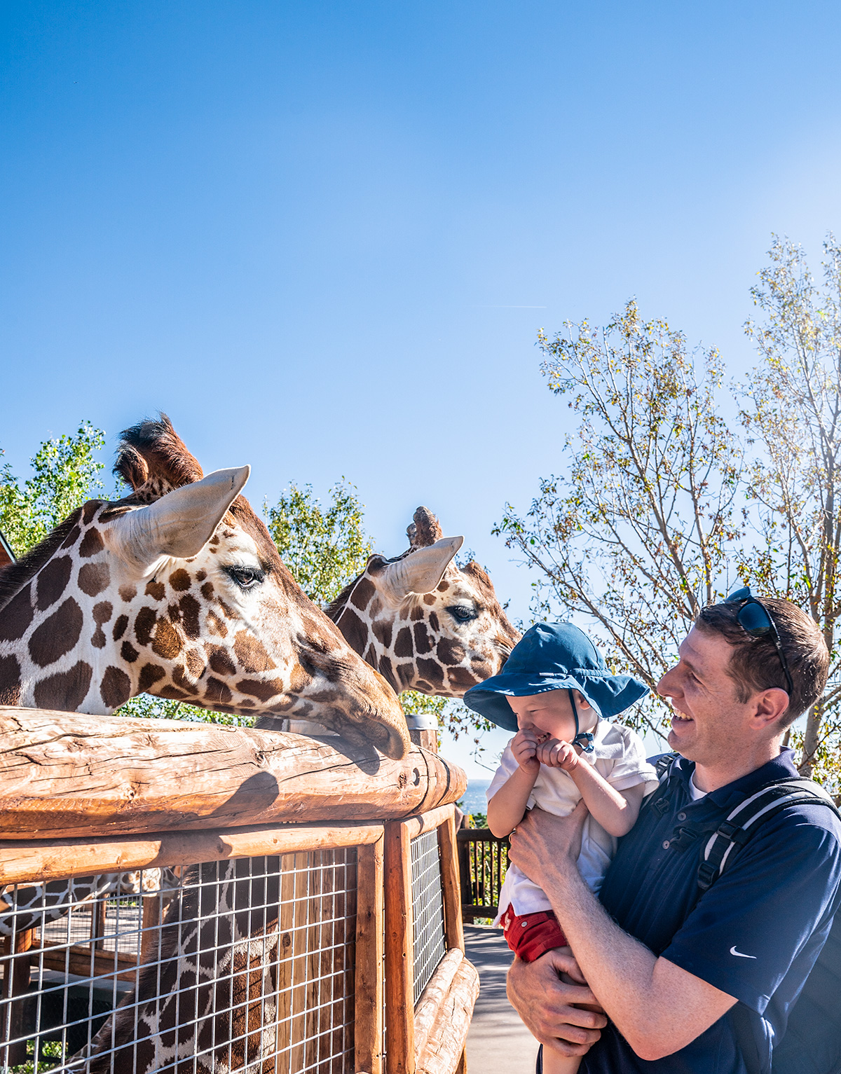 Meeting-Giraffes-Cheyenne-Mountain-Zoo-Colorado-Springs
