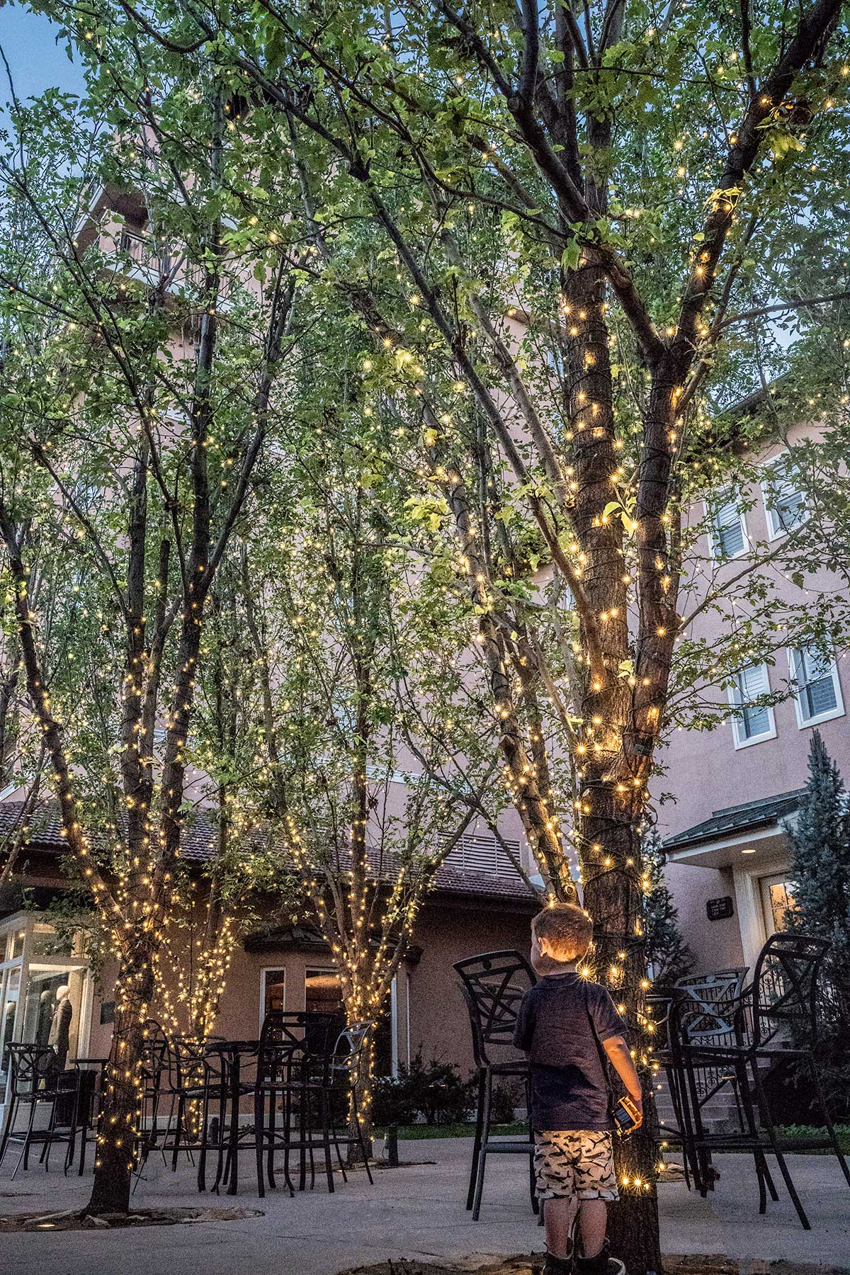 Tree-Lights-The-Broadmoor-Colorado