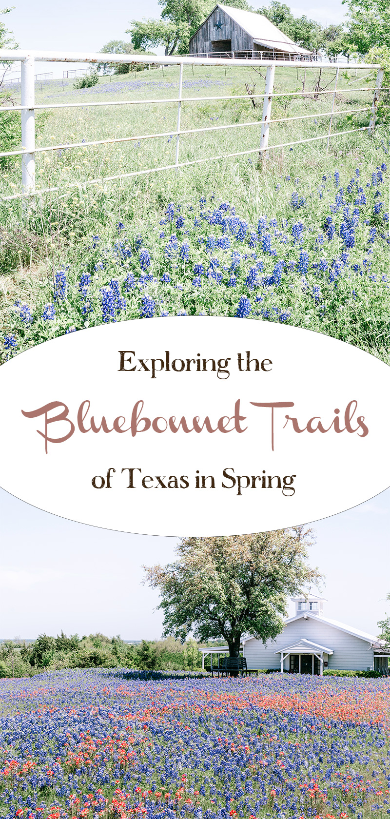 Exploring-the-Bluebonnet-Trails-of-Texas-in-Spring