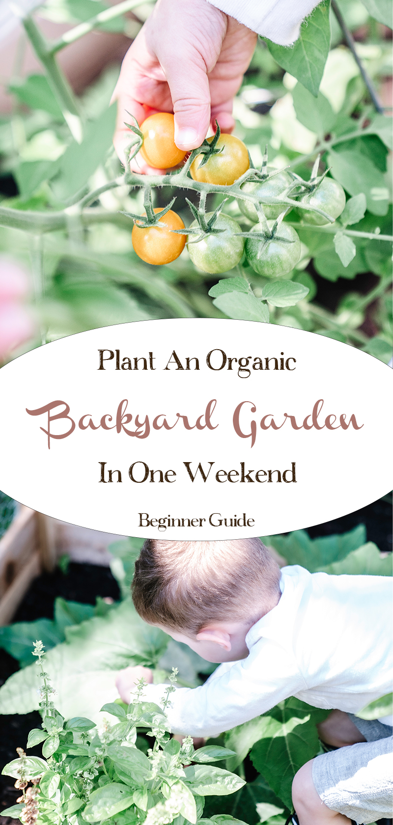 Plant-an-Organic-Backyard-Garden-in-One-Weekend