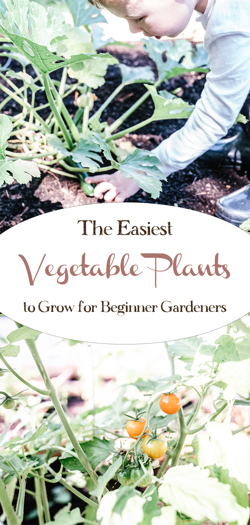 The-Easiest-Vegetable-Plants-To-Grow-For-Beginner-Gardeners