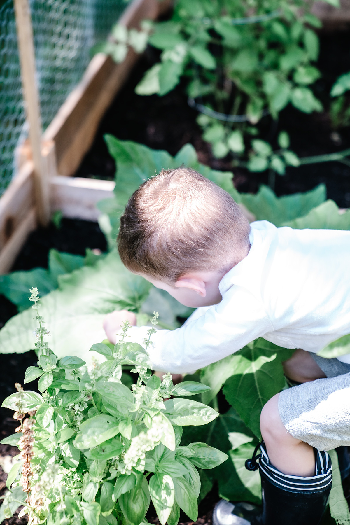Have-Kids-Heres-Why-You-Should-Grow A-Garden