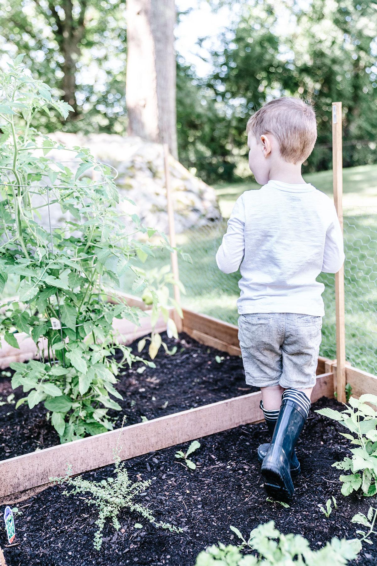 Easy-Beginner-Guide-Plant-Your-Organic-Backyard-Garden-In-One-Weekend